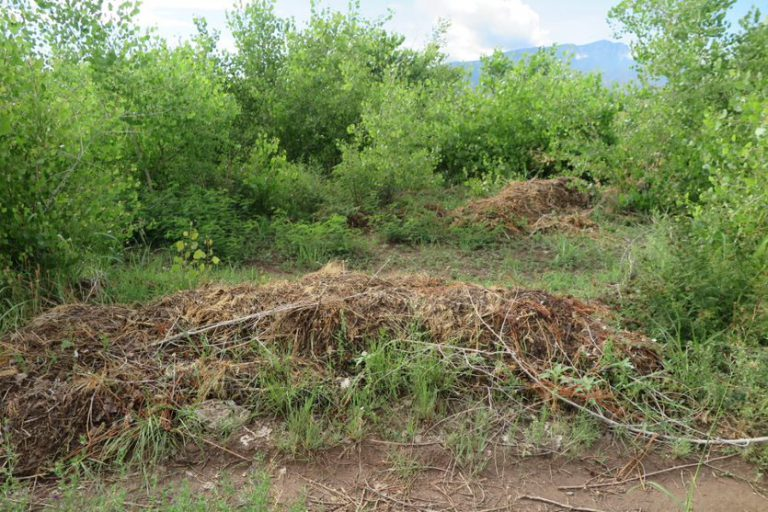 North Cottonwood Plantation Dump