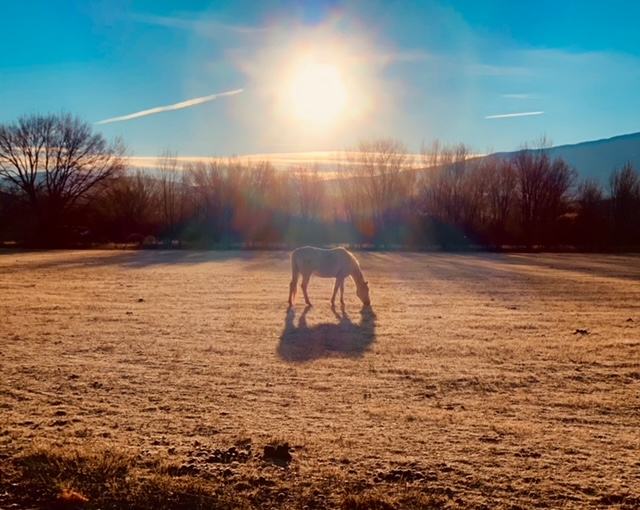 horse and a clear day (photo by April Armijo)