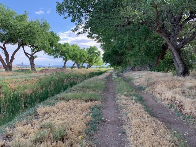 cottonwoods and irrigation (photo by April Armijo)
