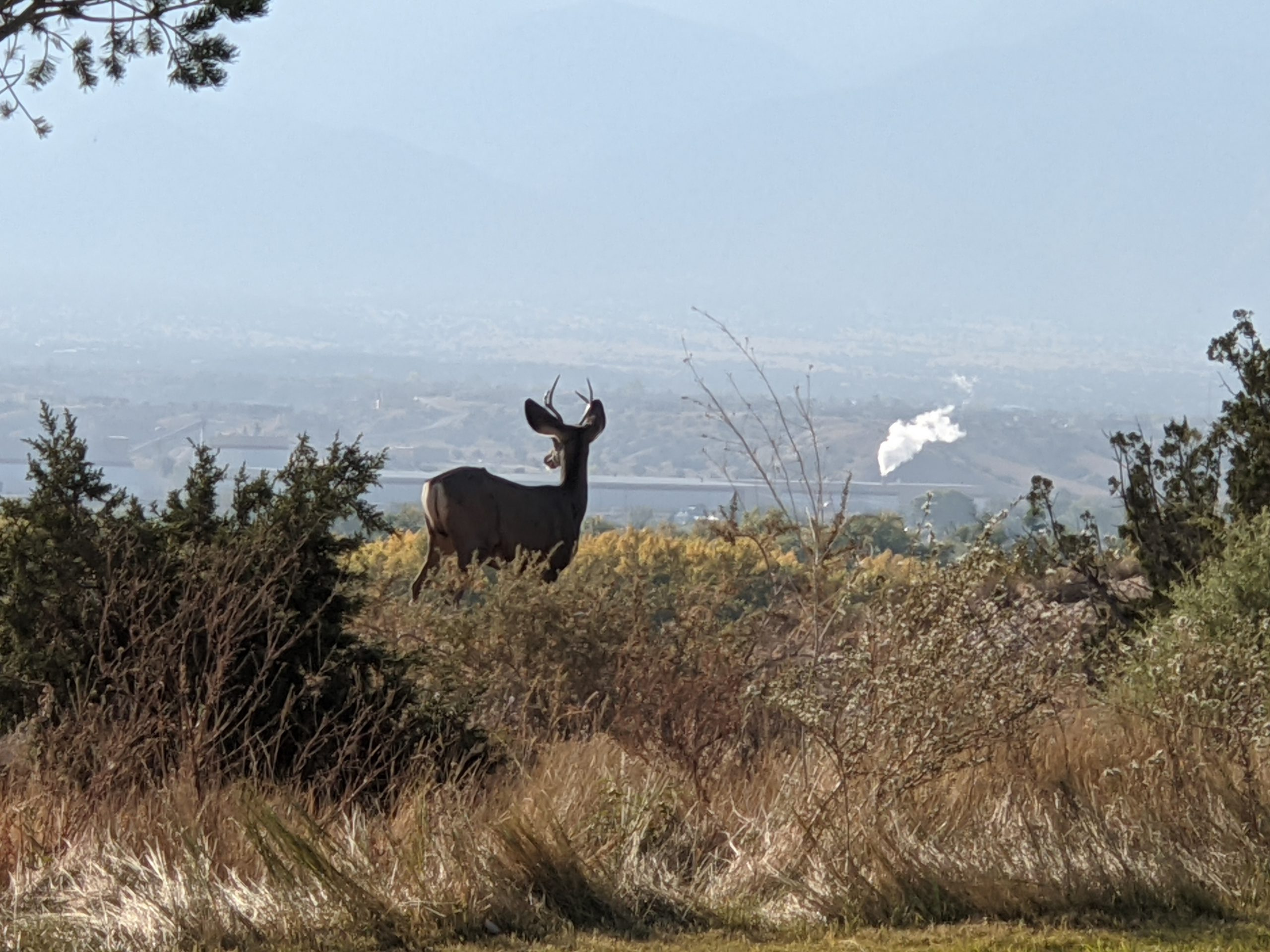 This deer takes in the view that can become obstructed by emission sources such as the Gypsum Wallboard Plant​ (photo by Eric Baca)
