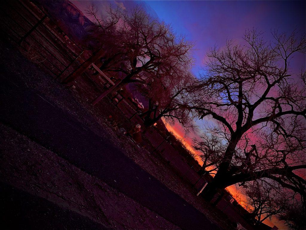 Sunset and cottonwoods (photo by Jamie Naranjo)