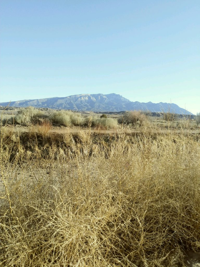 Winter Sandias and dry brush (photo by Marge Garcia)