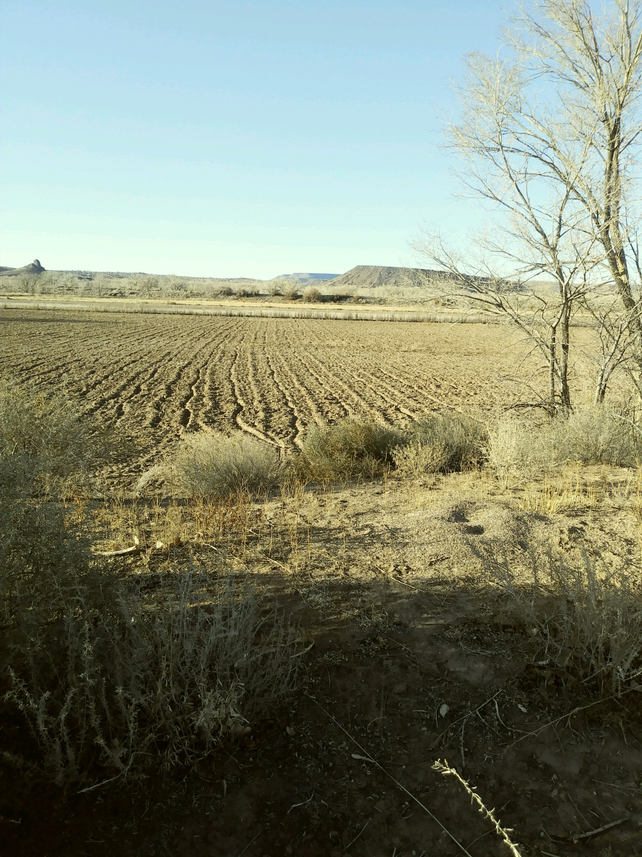 Field in North Ranchitos recently disked (photo by Marge Garcia)