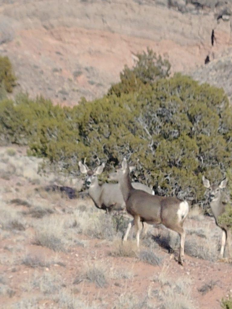 Group of deer (photo by Simon Garcia)